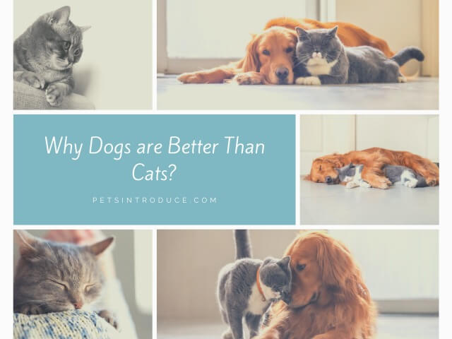 Why Dogs Are Better Than Cats?