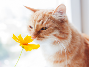 Why Cats Are Better Dogs