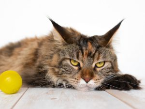 cats alertness why cats are better than dogs
