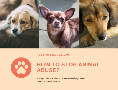 How to Stop Animal Abuse?