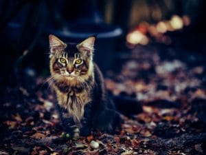 Pets Introduce types of tabby cats Ticked Tabby