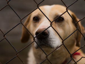 Pets Introduce How to Stop Animal Abuse