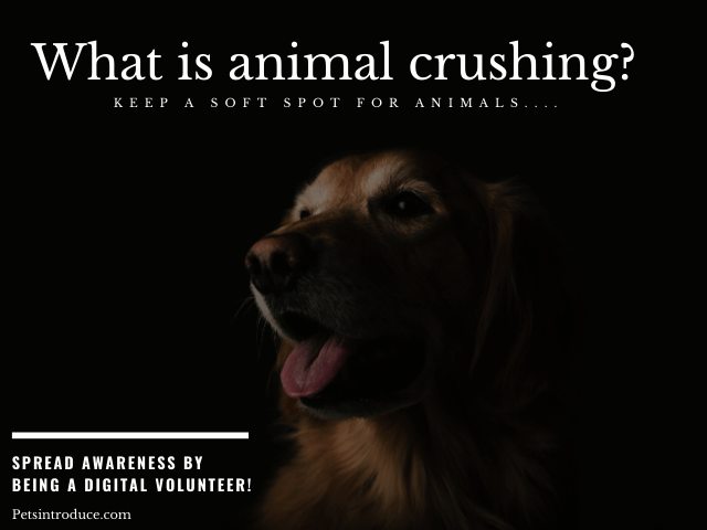 What is Animal Crushing?