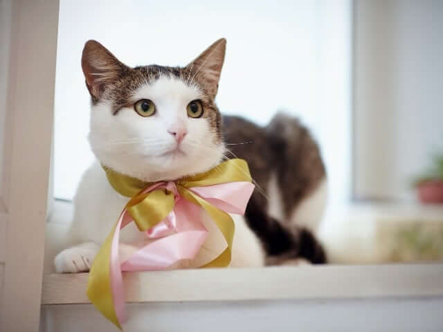 Pets Introduce types of tabby cats spotted Tabby