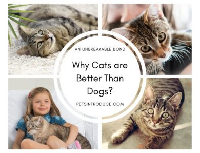 Why Cats Are Better Than Dogs?