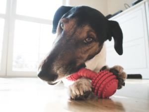 stop Licking paws remedies for dogs