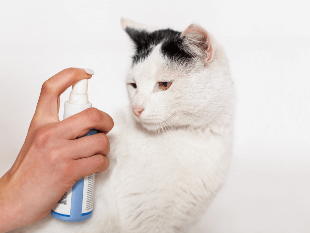 How to Discipline a cats