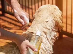 dog remedies for licking