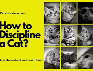 How to Discipline a Cat?