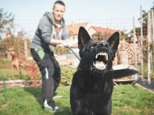 Shows fear or aggression towards strangers and dogs