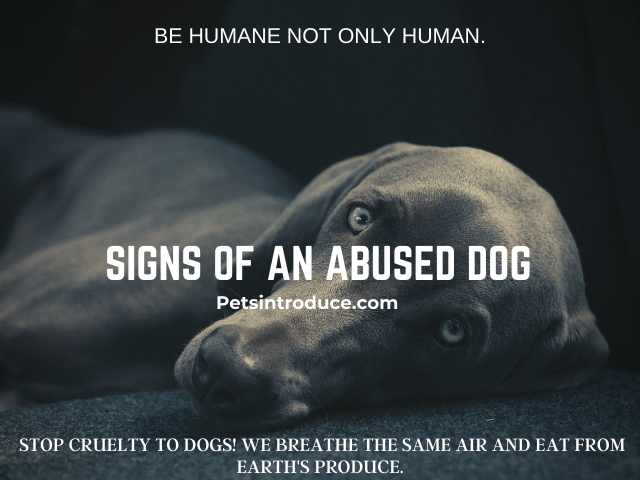 Signs of an Abused Dog!
