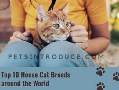 Top 10 House Cat Breeds around the World
