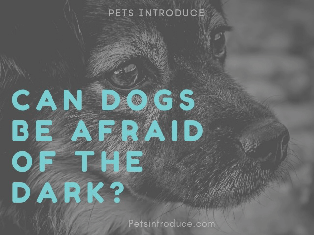 Can Dogs Be Afraid Of The Dark?