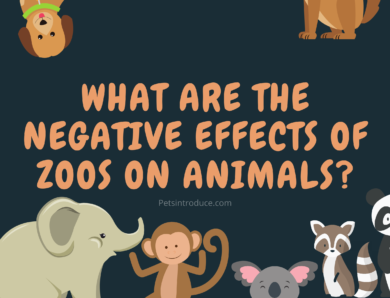 What are the Negative Effects of Zoos on Animals?
