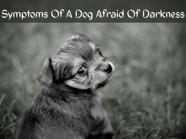 Can Dogs Be Afraid Of The Dark