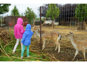 what are the negative effect of animals at zoo