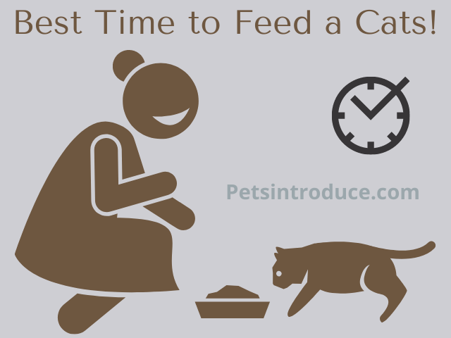 Best Time to Feed Cats