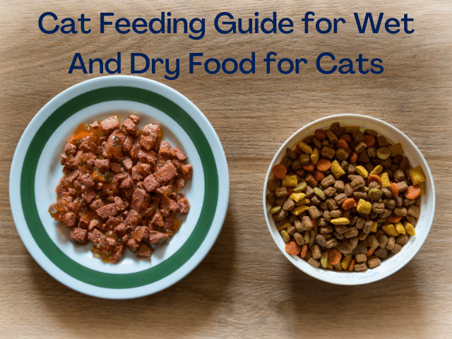 Best time to Give Cats foods