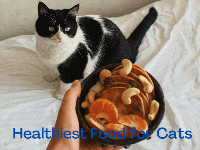 Best Time to Feed a Cats, Healthiest Food for cats